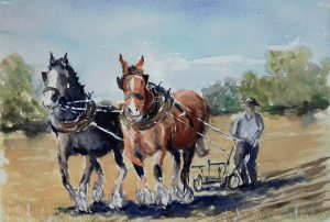 shire horses, ploughing. watercolour by roy munday. artclasses for beginners, liverpool, southport, merseyside